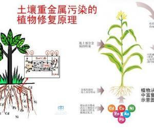 农业重金属超标加重 各地普查土壤污染