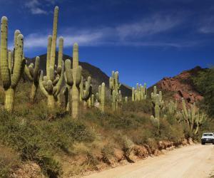 阿根廷国道40号公路 令人意外的奇妙旅程